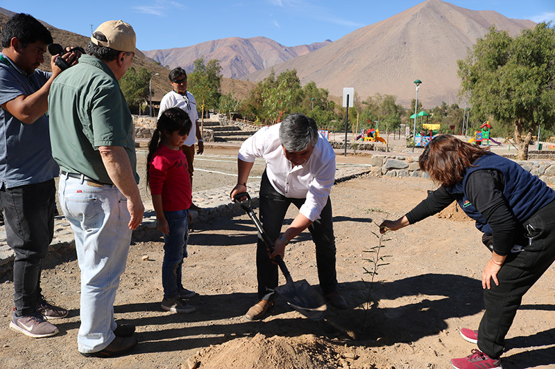 Photo of En Vicuña se espera la plantación de 12 mil algarrobos alrededor de la comuna