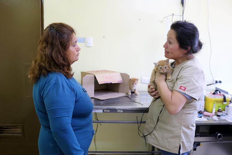 Photo of Veterinaria municipal de Vicuña sigue trabajando en torno a la tenencia responsable de mascotas