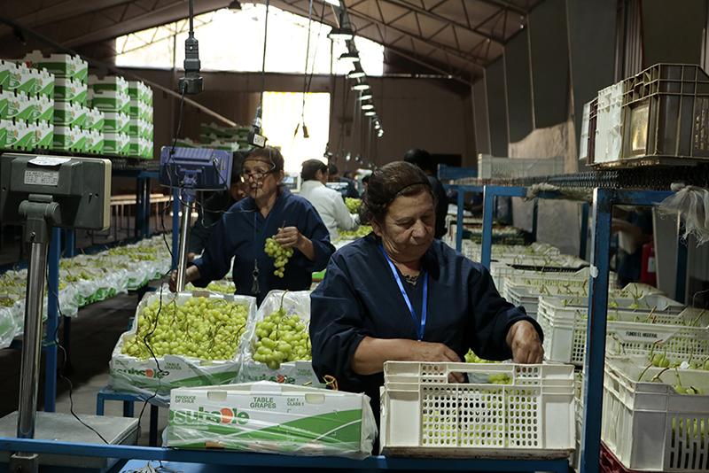 Photo of Comienza una nueva temporada agro-frutícola en el Valle de Elqui