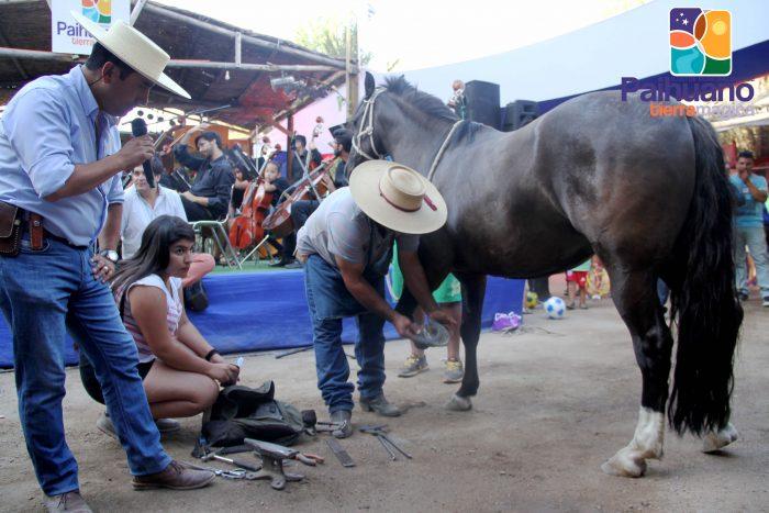 Photo of Día del Huaso Paihuanino se celebrará a través de plataformas digitales