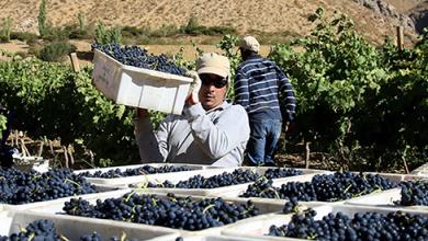 Photo of Levantan catastro para otorgar certificado de desplazamiento agrícola  durante la cuarentena
