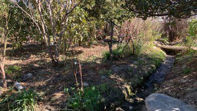 Photo of Plantean revalorizar los huertos familiares con el fin de adaptar técnicas de riego y cultivo