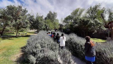 """Photo of Proyecto """"Poesía botánica en el jardín de Gabriela"""" se desarrolla en Museo de Vicuña"""